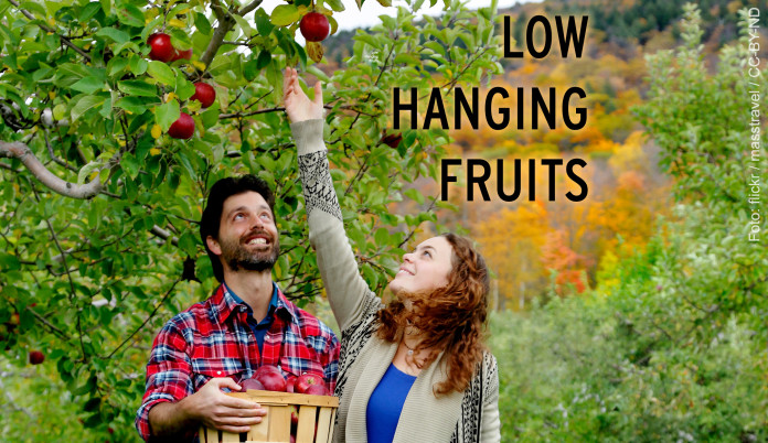 Low Hanging Fruits – Foto von der Apfelernte.